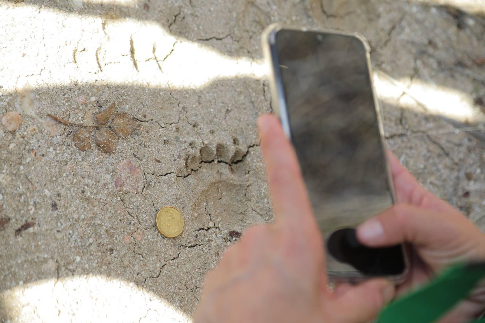 Un participante fotografía la huella de una animal.