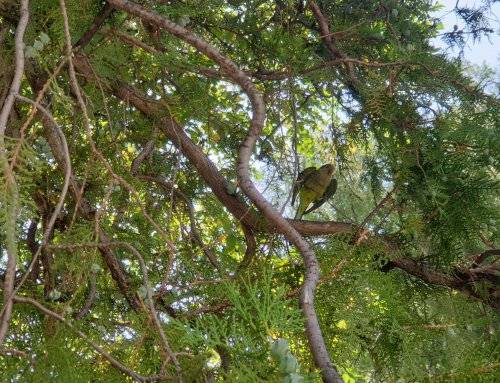 Se solicita la colaboración ciudadana para un estudio sobre especies exóticas invasoras y fauna silvestre en el municipio