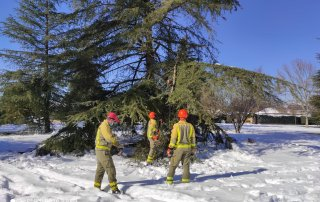 Agentes forestales realizando los trabajos.