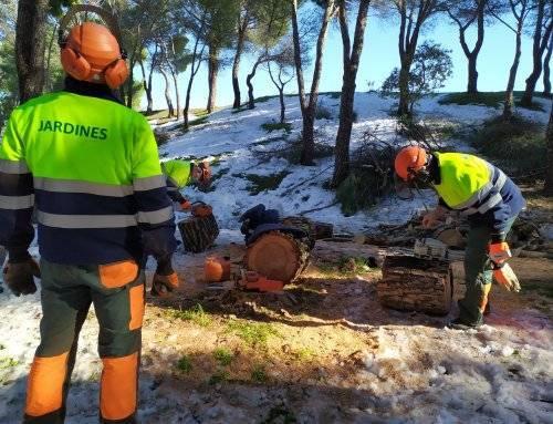Retirada de árboles dañados en calles y zonas verdes