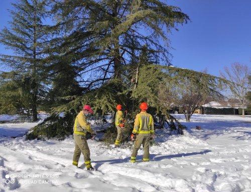 Las Brigadas Forestales colaboran en la retirada del arbolado dañado por la nevada