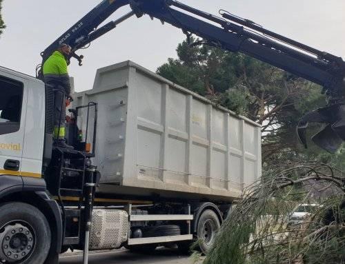 Se recogen más de 600 toneladas de restos vegetales tras el paso de Filomena