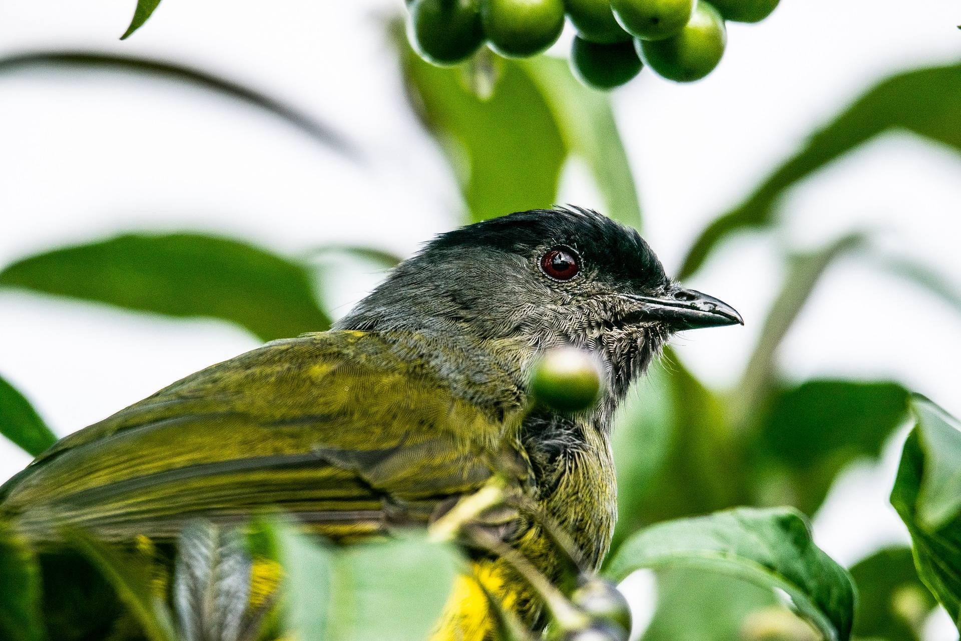 Imagen pájaro