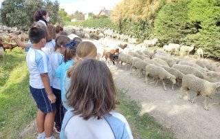 Alumnos del colegio Zola Villafranca viendo el paso de las ovejas.
